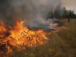 Масштабна пожежа охопила Львівщину, пекельне полум'я пожирає кілометри: рятувальникам не вистачає рук і шлангів