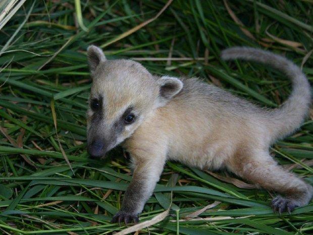 Одеський зоопарк обзавівся казковими малюками: фото рідкісних тваринок