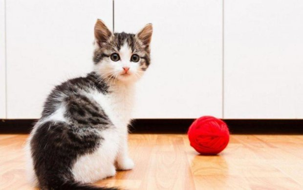Этот метод заставит вашу кошку стать послушной