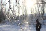 Раптову весну змінять люті морози: що буде з рослинами