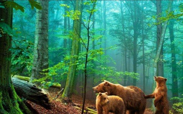 Нахабні ведмеді з'їли всю ковбасу: відео