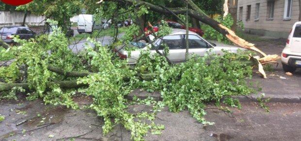 У Києві негода влаштувала моторошний деревопад - припаркована автівка перетворилася на котлету, водія шкода