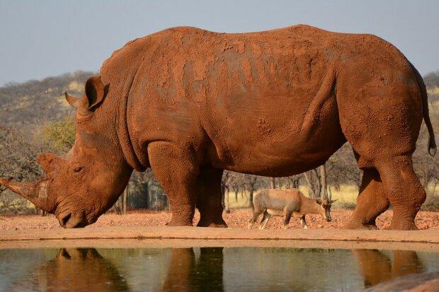 Під Вінницею виявили кістки носорога, це може переписати історію: археологи приголомшені