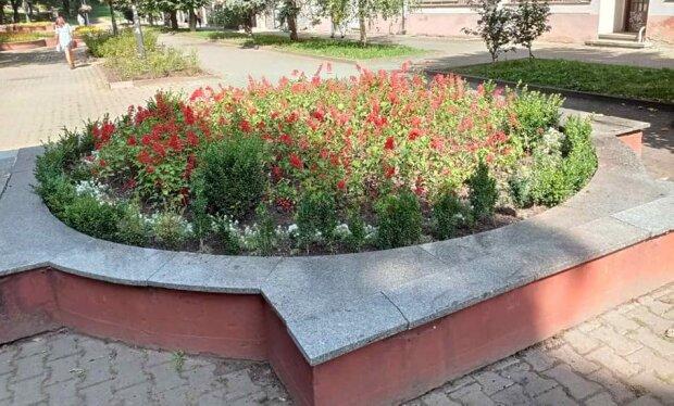 У Франківську квіткові терористи залишили городян без клумби