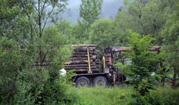 Спасти лес: специалисты создали проект расширения заповедников