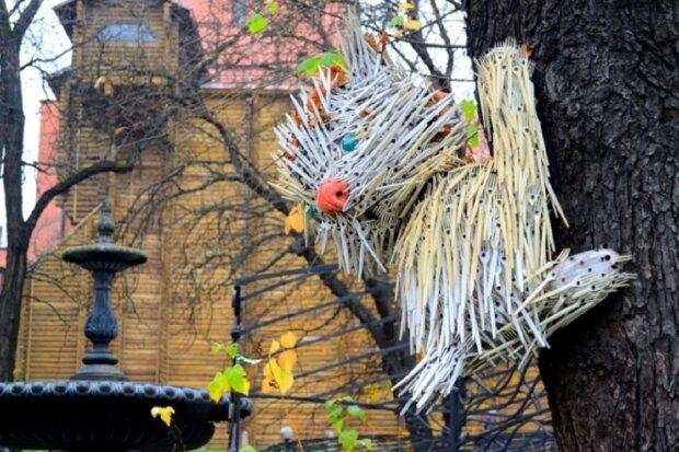 Виделковий кіт, фото: bigkyiv.com.ua