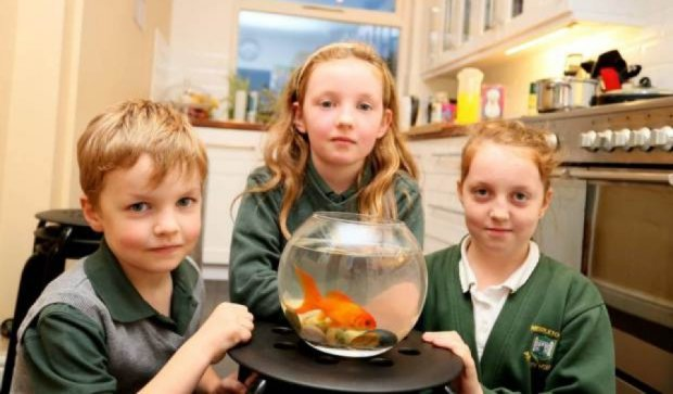 Злодії вкрали ноутбуки, але  врятували рибку