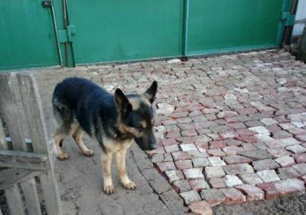 Собака на продажу от Госисполнительной службы, фото: Facebook