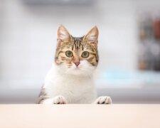 кішка, фото: royalcanin.com