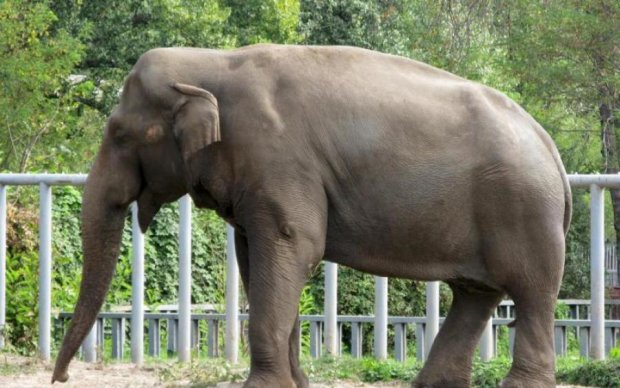 Столичный зоопарк ждут изменения