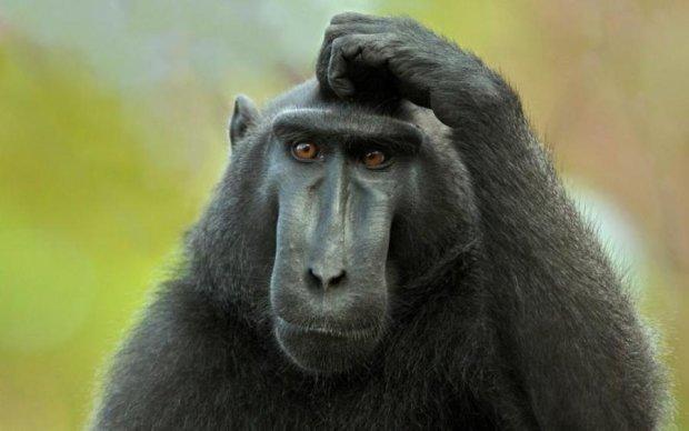 Самотня мавпа знайшла собі дивного друга