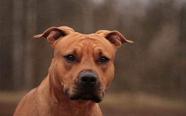 Лондонский пес-убийца когда-то спас жизнь своего хозяина