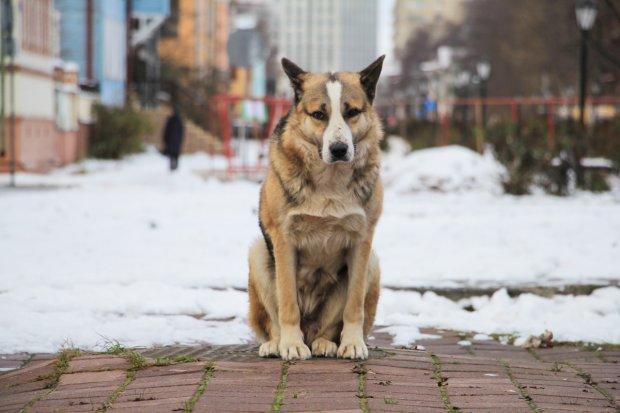 Львівський шкуродер жорстко розправився зі своїм собакою: українці вимагають розплати