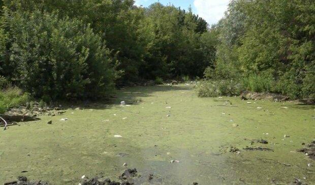 Река на Днепропетровщине на грани экологической катастрофы — массовый мор рыбы и тяжелые химикаты