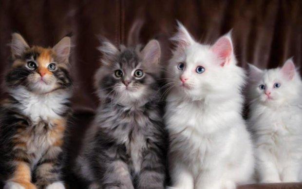 Одесситка заморила голодом сотни котят