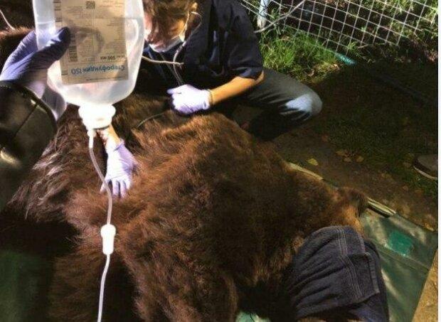 """Во Львовском зоопарке спасли косолапого разбойника: """"Получил серьезные травмы"""""""