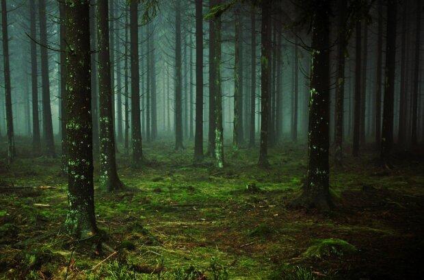 Ліс, фото: pixabay.com