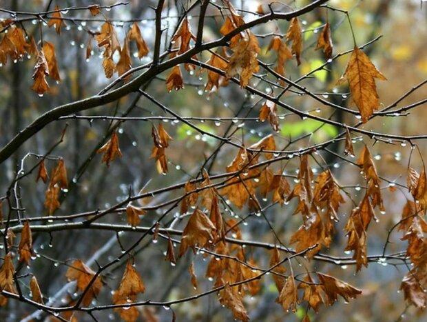 Погода на 29 октября: холод пронизывает всю страну