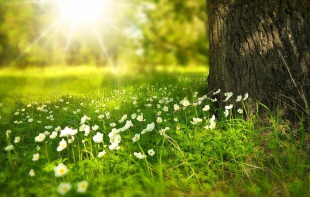 Тепло, літо, ілюстративне фото: pixabay.com