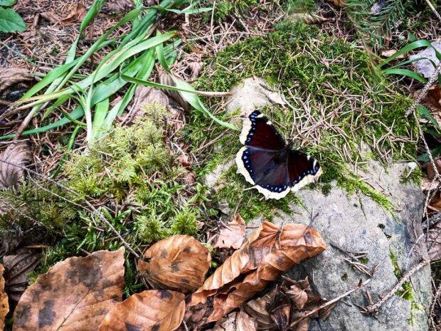 Метелик / фото: Facebook