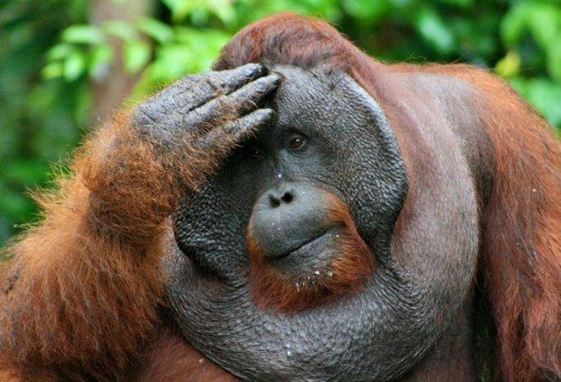 Навіть мавпи здатні займатися бізнесом: вчені розвеселили незвичайним дослідженням