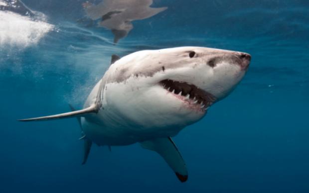 Акула атаковала детей на популярном курорте: фото