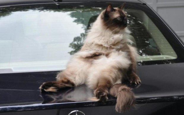 Кішка-гонщиця прокотилася з вітерцем на даху авто: відео