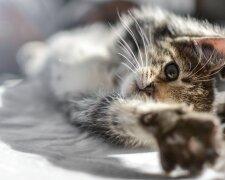 кошеня, pxhere