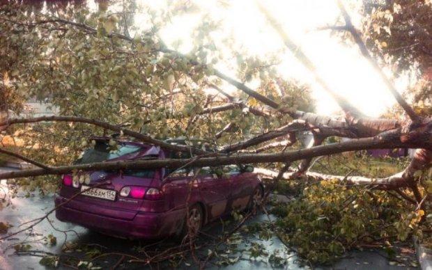Стихія дісталась Київщини: ураган повиривав дерева та електроопори