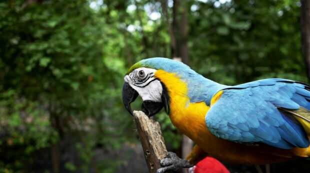 Папуга, фото pxhere