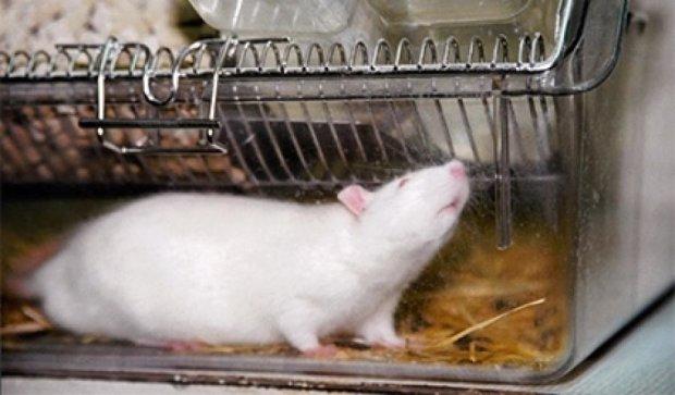 Вчені знайшли клітини обережності