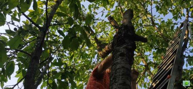 Дерево с ягодами, фото: скриншот из видео