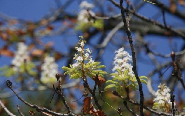 Погода на 10 березня: довгоочікувана весна чи новий циклон