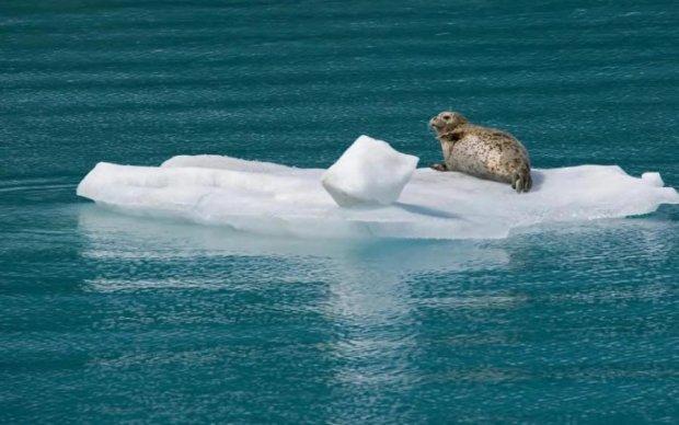 Рыбаки заметили тюленя на льдине. Когда они подплыли ближе, то потеряли дар речи: фото