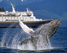 вчені вперше в історії записали пісню японського кита