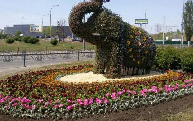 У Києві з'явився зелений слоник