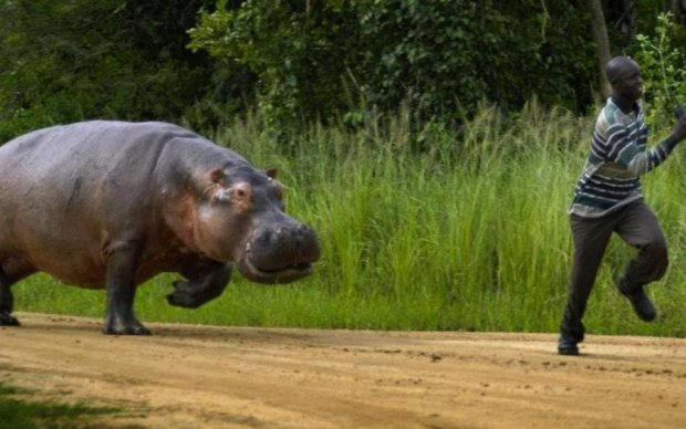 10 найнебезпечніших тварин, від яких потрібно триматися подалі: відео