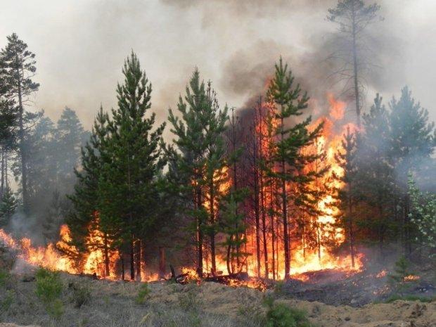 Синоптики предупредили о зловещей опасности: Украину испепелит адское пламя, дожди не спасут