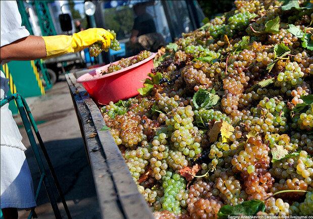 Виноград, фото из открытых источников