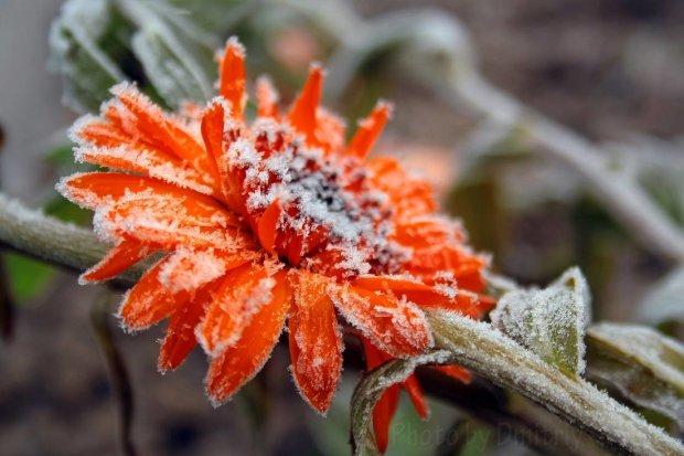 Погода на 27 вересня: синоптик розповіла, де чекати заморозків