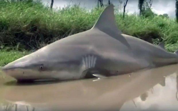 "Ураган ""Дебби"" забросил акулу в город - видео"