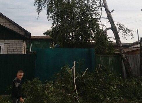 Коммунальщики спилили не ту березу и заставили хохотать всю Украину: пила есть - ума не надо