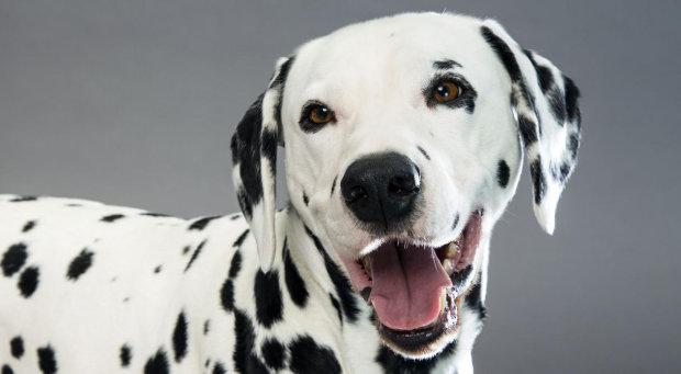 Відданий пес врятував господарів, пожертвувавши власним життям: сумне відео