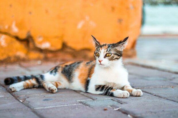 кішка, pxhere