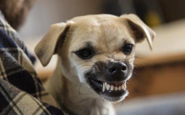 Вчені виявили у собак дивний синдром