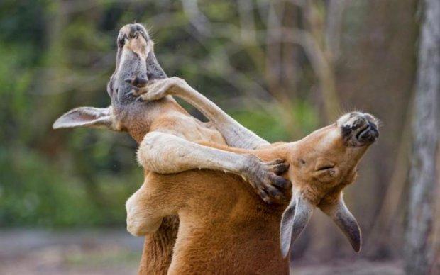 Невозможно сдержать улыбку: в сети показали самые неудачные фото животных