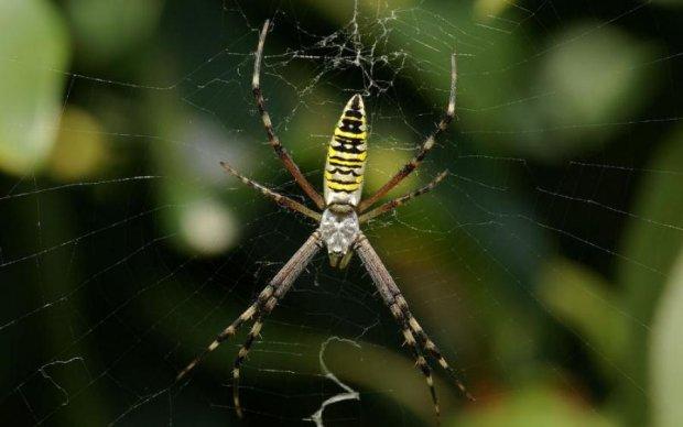 Что делать если укусил паук: дельные советы от доктора Комаровского
