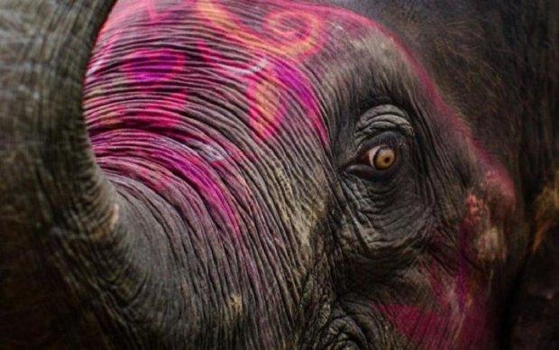 Сила природы: разьяренный слон шокировал гостей индийского праздника
