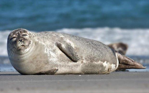 Битва кота с тюленем прогремела на весь мир: видео