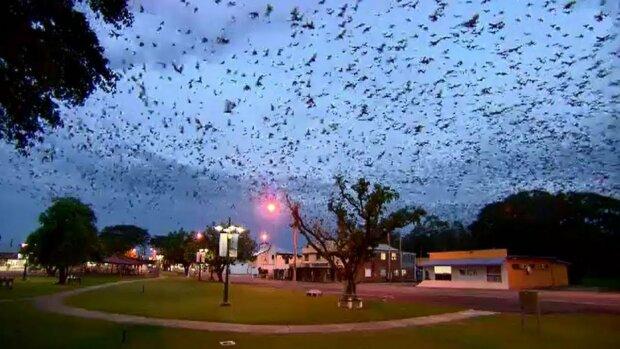 """Торнадо кажанів: рукокрилі захопили ціле місто, перетворившись на """"чуму біблійних розмірів"""""""